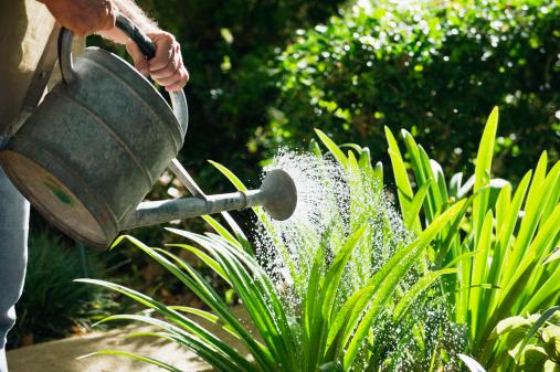 brisbane garden help