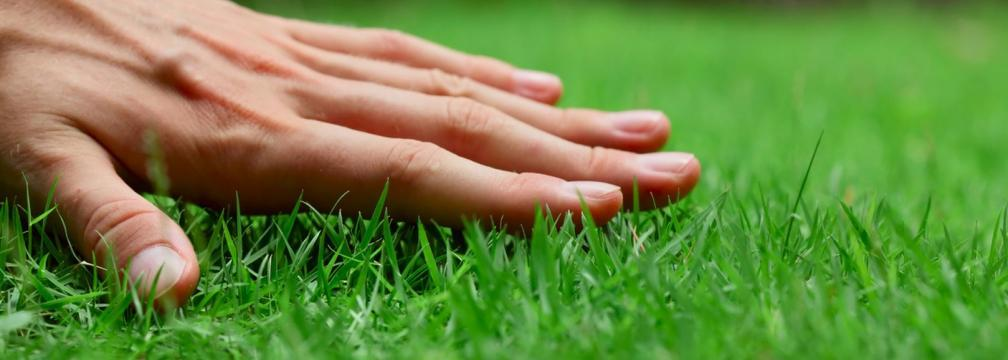 lawn care brisbane - Circle Maintenance