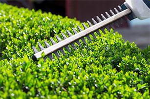 Gardening Maintenance Gallery - Circle M