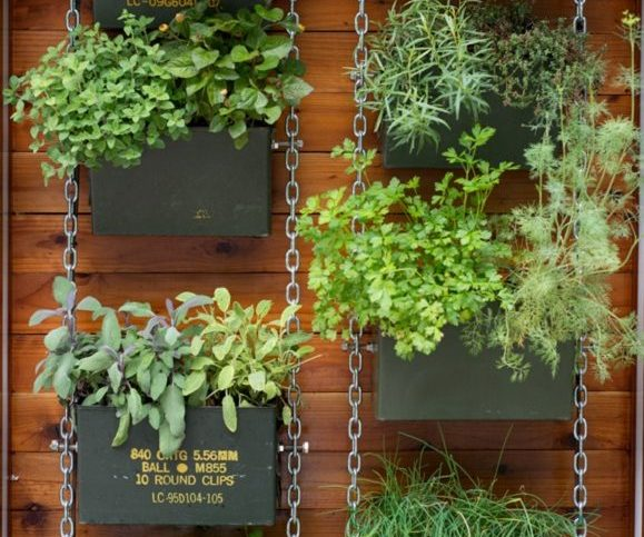 vertical garden - brisbane lawn care