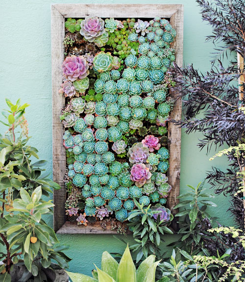 vertical garden succulents - garden clean up